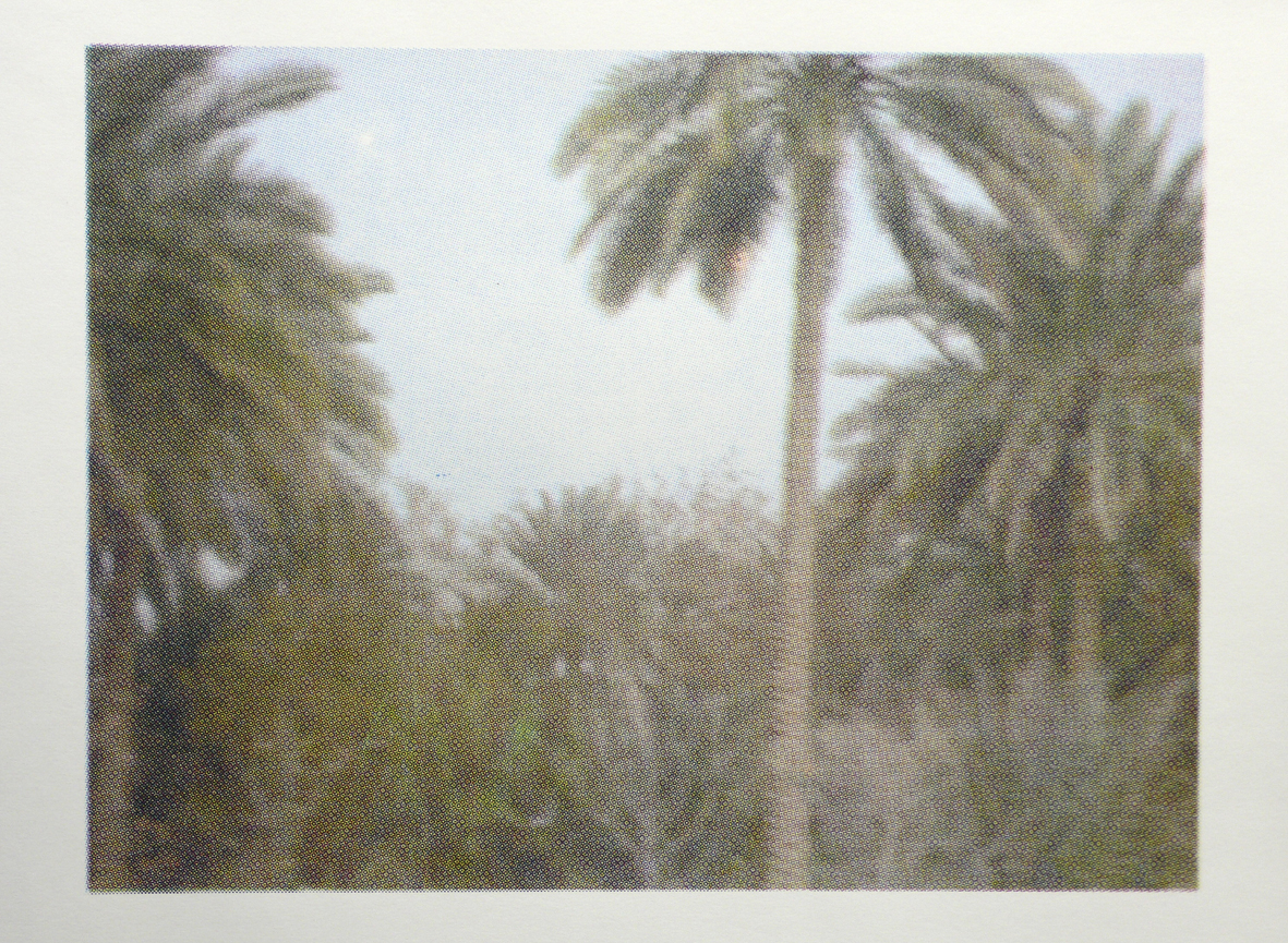 Palm Trees of Iraq